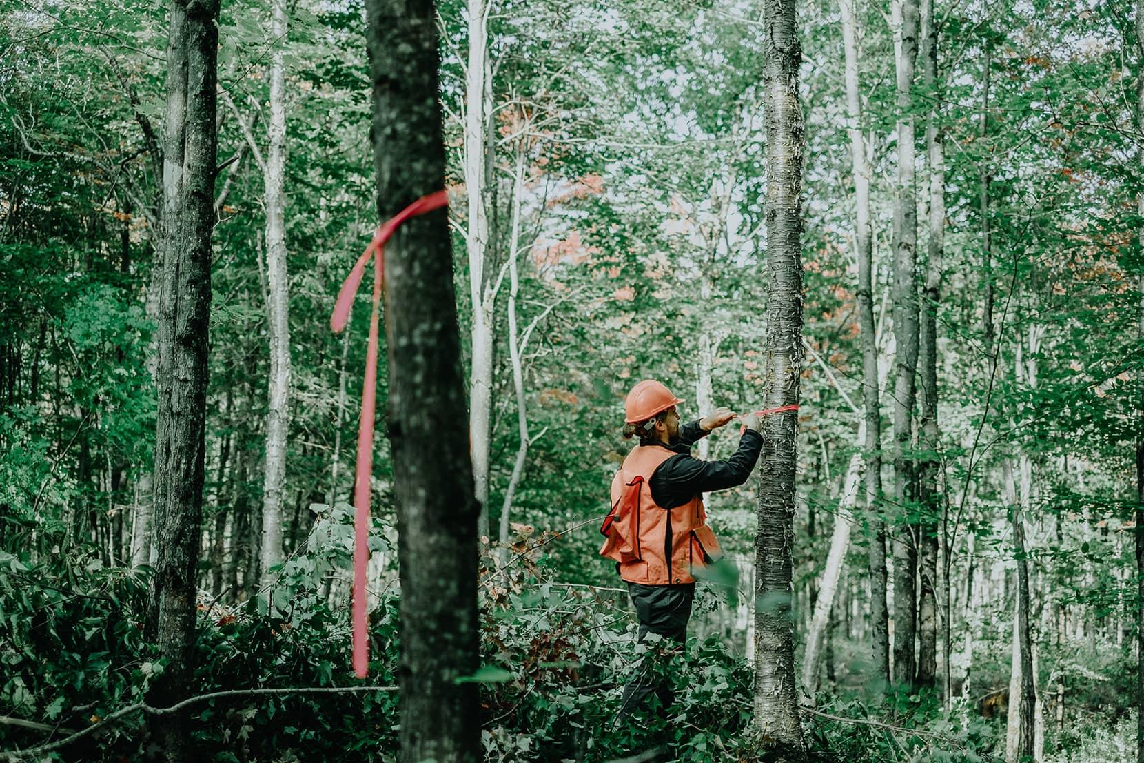 Laforêt - Marquage des arbres (martelage) et identification