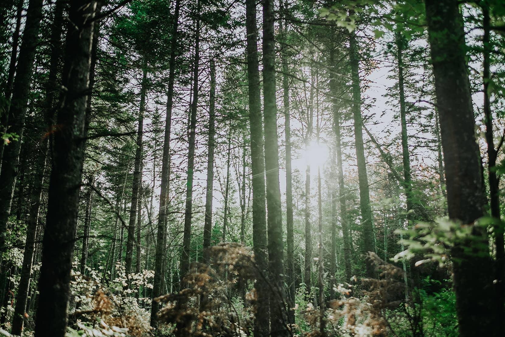 Laforêt - Plan d'aménagement forestier
