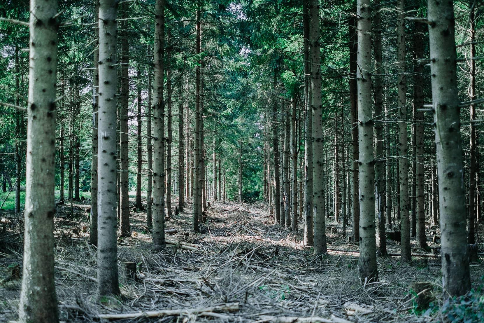 Laforêt - Entretien de plantation et élagage des arbres