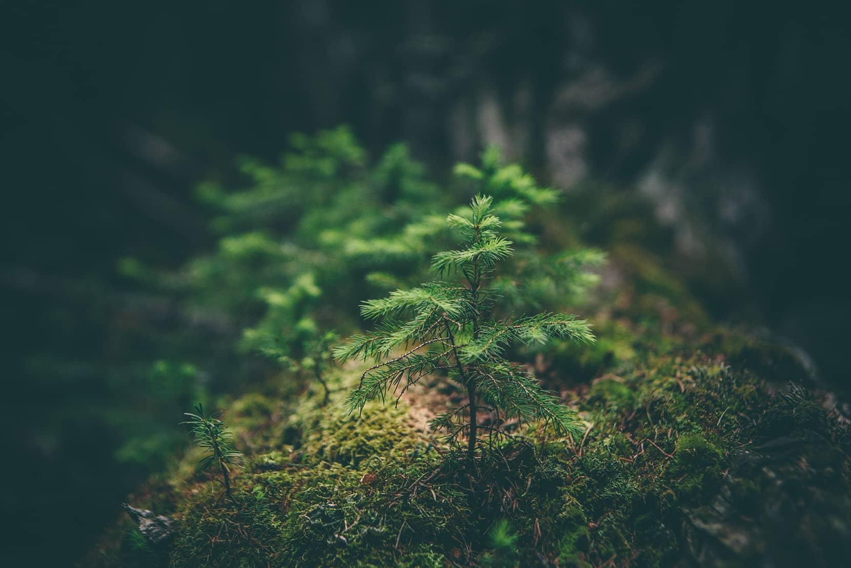 Laforêt - Reboisement forestier et enrichissement