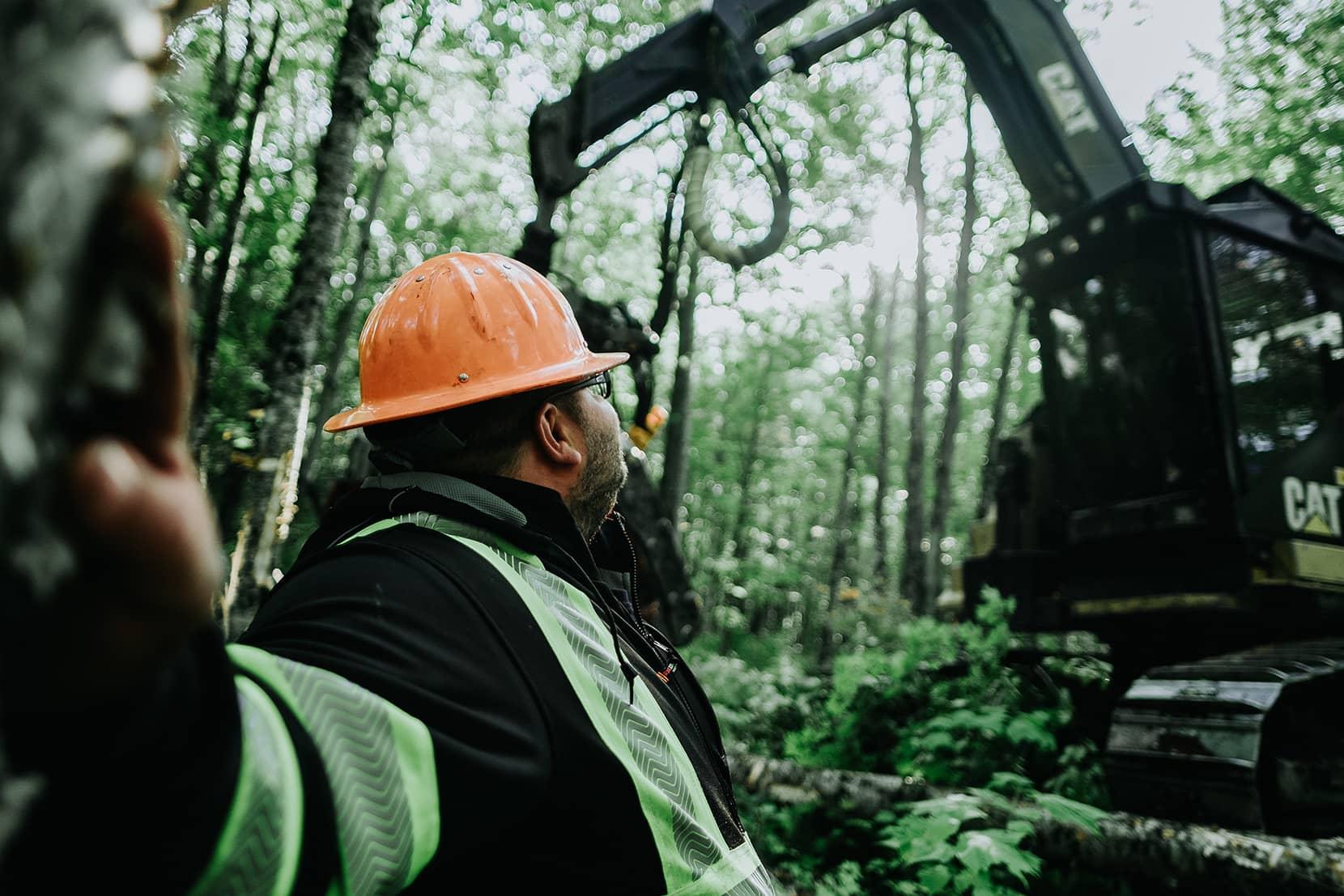 Laforêt - Travaux commerciaux et coupe forestière